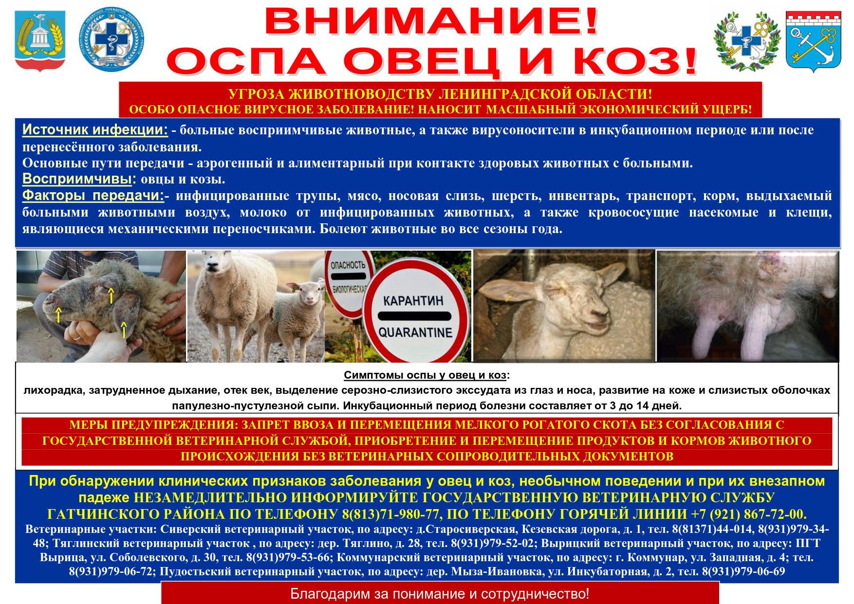 Памятка Оспа овец_2021(1)_1